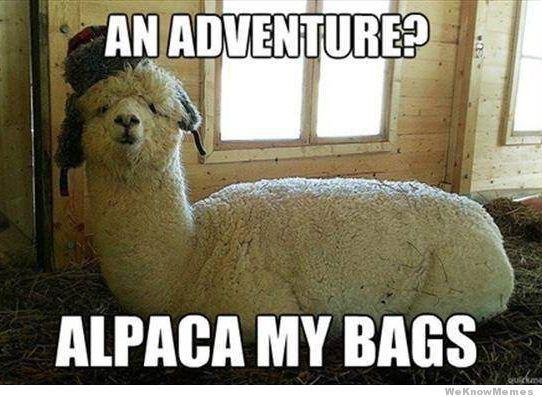 an-adventure-alpaca-my-bags